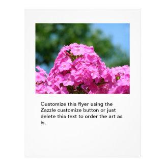 Le Phlox fleurit le beau pourpre de rose de photo  Prospectus Personnalisés