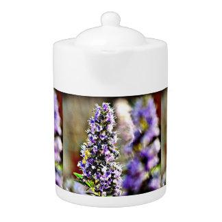 Le pourpre fleurit le pot de thé