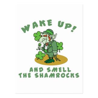 Le shamrock réveillent et sentent les shamrocks carte postale