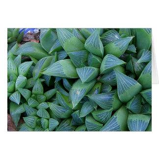 Le Succulent de Haworthia plante la carte de note