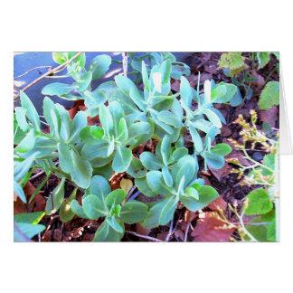 Le Succulent plante la carte de voeux