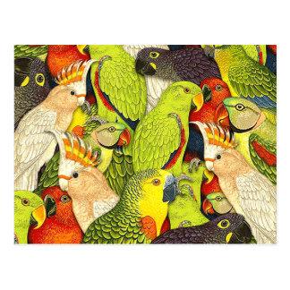 Le vert lunatique de nature Parrots le motif d'ois Cartes Postales