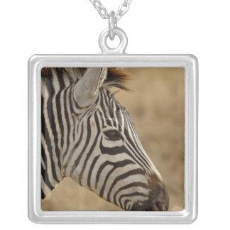 Le zèbre de Burchell, burchellii d'Equus, Collier