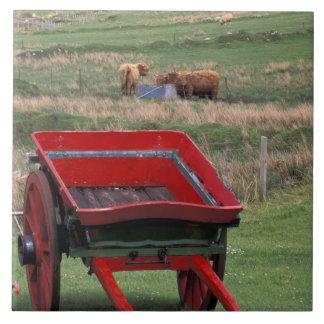 L'Ecosse, île de Skye, Kilmuir. Animaux de ferme Grand Carreau Carré