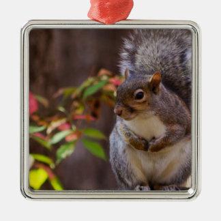 L'écureuil prie patiemment ornement carré argenté