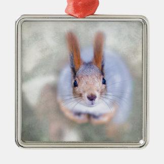 L'écureuil vous regarde de bas en haut ornement carré argenté