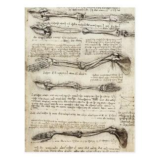 Leonardo da Vinci : Études du bras par le biceps Carte Postale