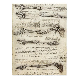 Leonardo da Vinci : Études du bras par le biceps Cartes Postales