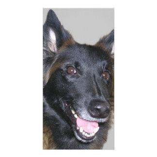 les animaux carte de courrier photocarte customisée