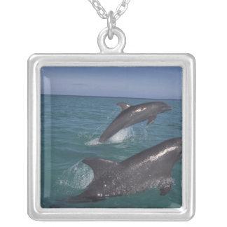 Les Caraïbe, Tursiops 4 de dauphins de Bottlenose Collier