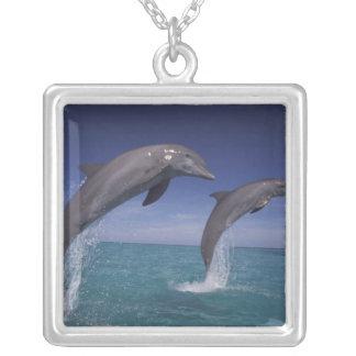 Les Caraïbe, Tursiops 8 de dauphins de Bottlenose Collier