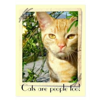 Les chats sont carte postale de personnes trop !
