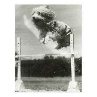 Les chiens sautant par-dessus la barre en hauteur carte postale