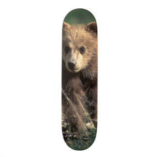 Les Etats-Unis, Alaska, parc national de Denali, Skateboard