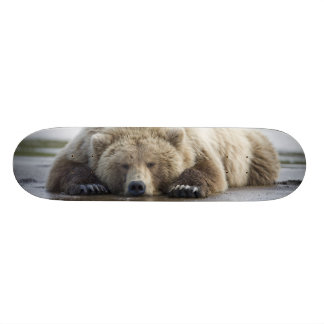 Les Etats-Unis, Alaska, parc national de Katmai, Skateboards Customisés