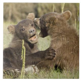 LES Etats-Unis. L'Alaska. Petits animaux d'ours cô Grand Carreau Carré