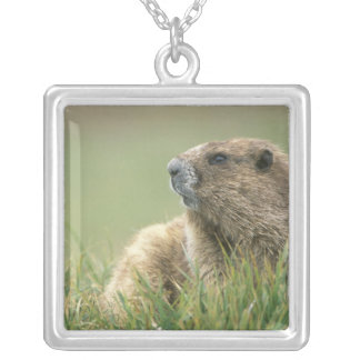 Les Etats-Unis, Washington, NP olympique, Marmot Collier