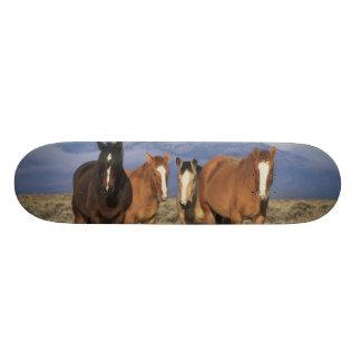 Les Etats-Unis, Wyoming, près du groupe de Cody de Skateboard 19,7 Cm