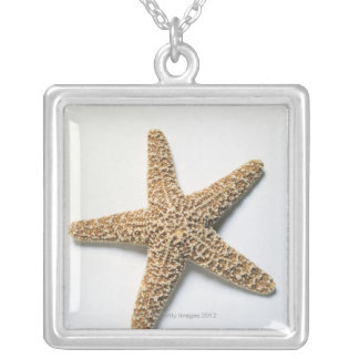 Les étoiles de mer écossent sur l'arrière - plan collier