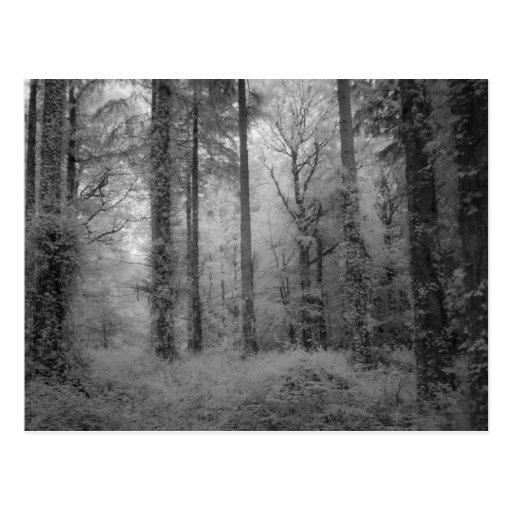 Les fées du NO1 en bois de Werndee Carte Postale