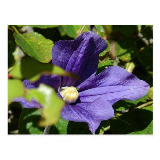 Les fleurs de garnissent des jardins d'île - carte postale