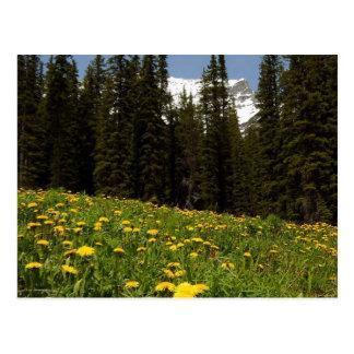 Les fleurs de pissenlits de ressort s'approchent carte postale