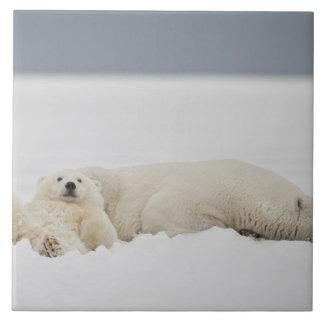 Les mensonges d'un petit animal d'ours blanc dans  grand carreau carré