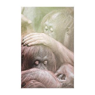 Les orangs-outans ont étiré la copie de toile