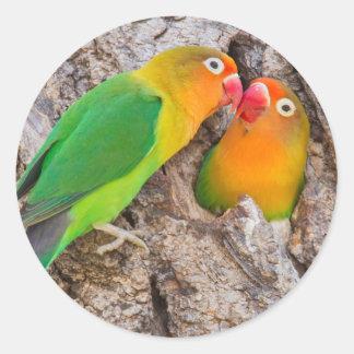 Les perruches de Fischer embrassant, Afrique Sticker Rond