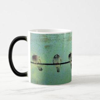 Les pigeons mug magique