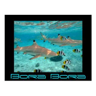 Les requins dans la lagune de Bora Bora Carte Postale