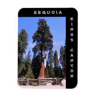 Les Rois Canyon Magnet de séquoia