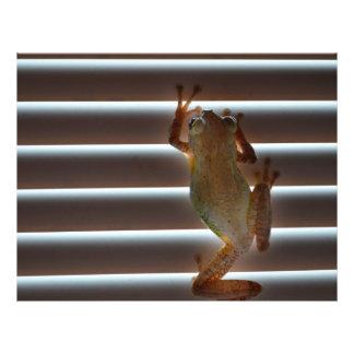 l'escalade de grenouille d'arbre aveugle la photo prospectus en couleur