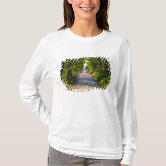 L'Europe, Italie, Toscane, arbre a rayé la route T-shirt