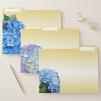 L'hortensia bleu fleurit des dossiers de gradient