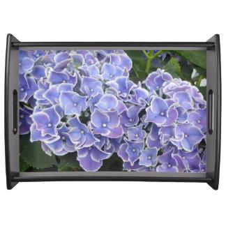 L'hortensia bleu fleurit le noir de plateau de