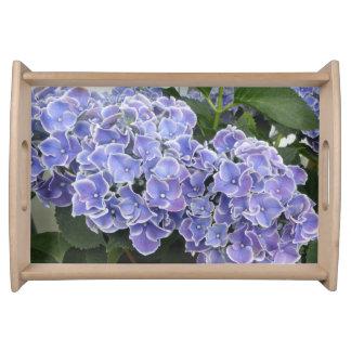 L'hortensia bleu fleurit le plateau de portion