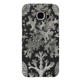 Lichens d'Ernst Haeckel