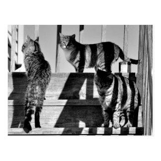 Lignes de chat carte postale