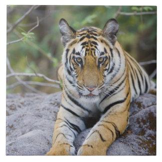 L'Inde, parc national de Bandhavgarh, petit animal Grand Carreau Carré