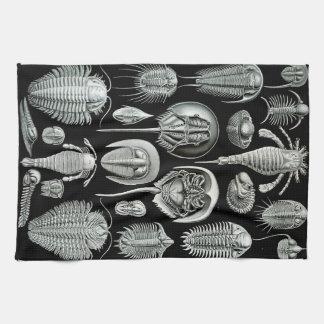 Linge De Cuisine Crabes d'Ernst Haeckel Aspidonia