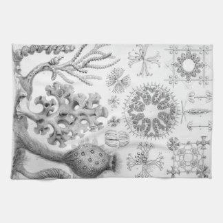 Linge De Cuisine Éponges d'Ernst Haeckel Hexactinellae