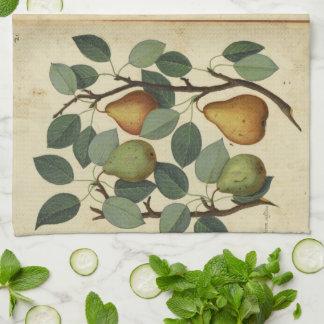 Linge De Cuisine Illustration botanique de fruit de poire vintage