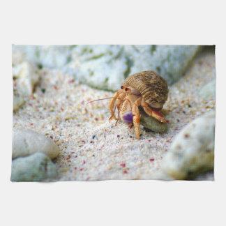 Linge De Cuisine Poncez le crabe, Curaçao, îles des Caraïbes, photo