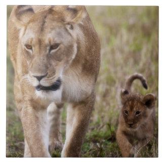 Lion femelle avec l'petit animal (Panthera Lion) c Grand Carreau Carré