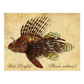 Lionfish rouge carte postale