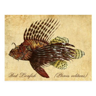 Lionfish rouge cartes postales