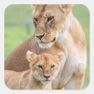 Lionne et lion CUB Sticker Carré