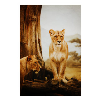 Lions Posters