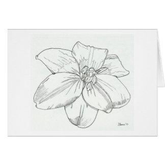 Lis blanc carte de vœux